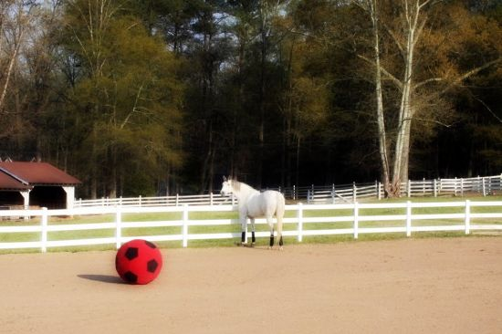 Chazot and the Ball