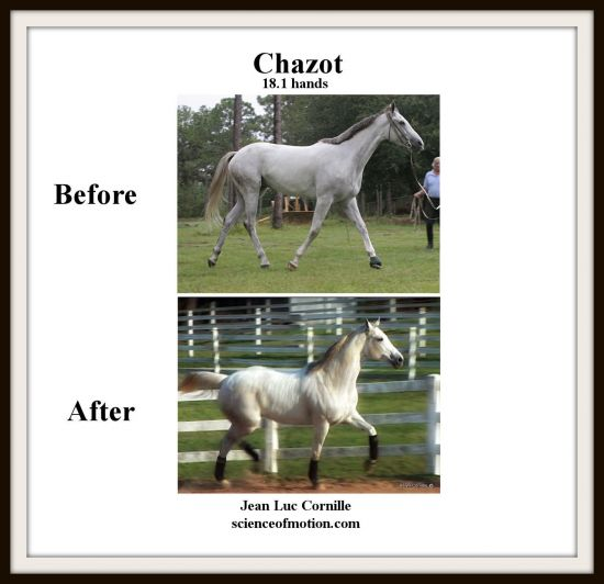 Chazot Before and After