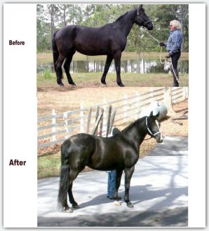 Equine science home study